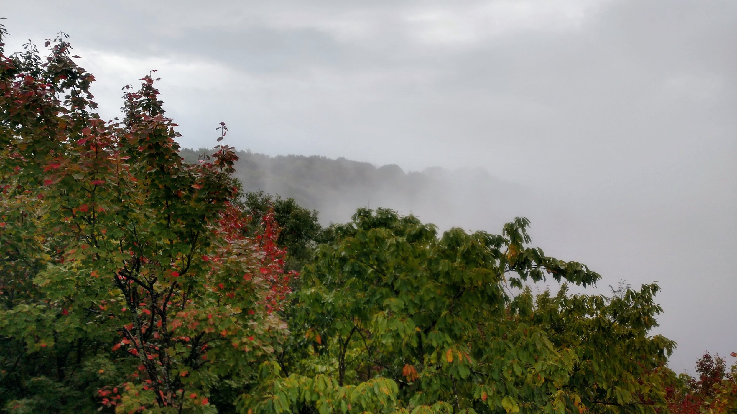 Afternoon fog at High Knob above Norton, Virginia