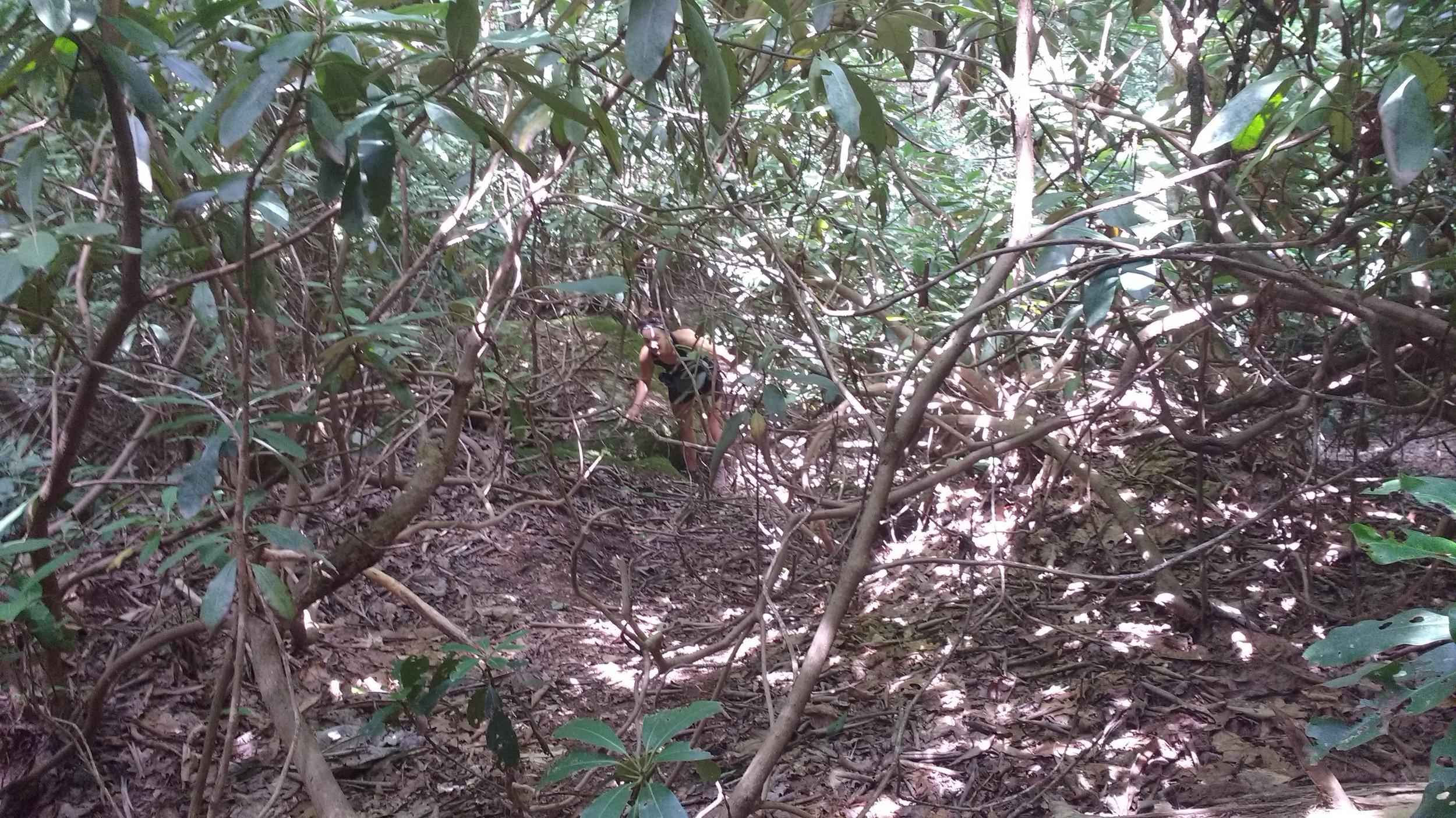 Hiking through the bush near Whittleton Arch