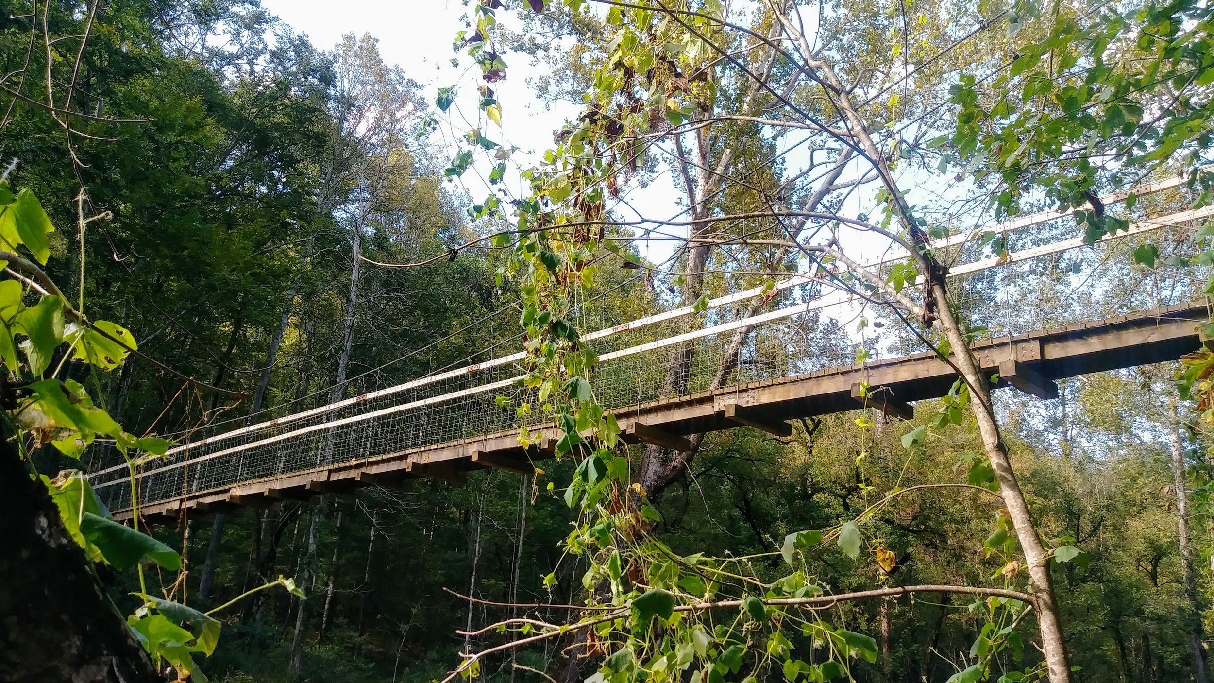 Riverside Jump Rock, Wildflowers, and a Tall Footbridge - Originally built to connect backpackers to Kentucky's Longest Trail, the Sheltowee Trace, this short 2 mile hike is ideal for kids. They can play in Red River, jump off a huge boulder, see wildflowers along the trail, and finally, cross a nice, tall footbridge!