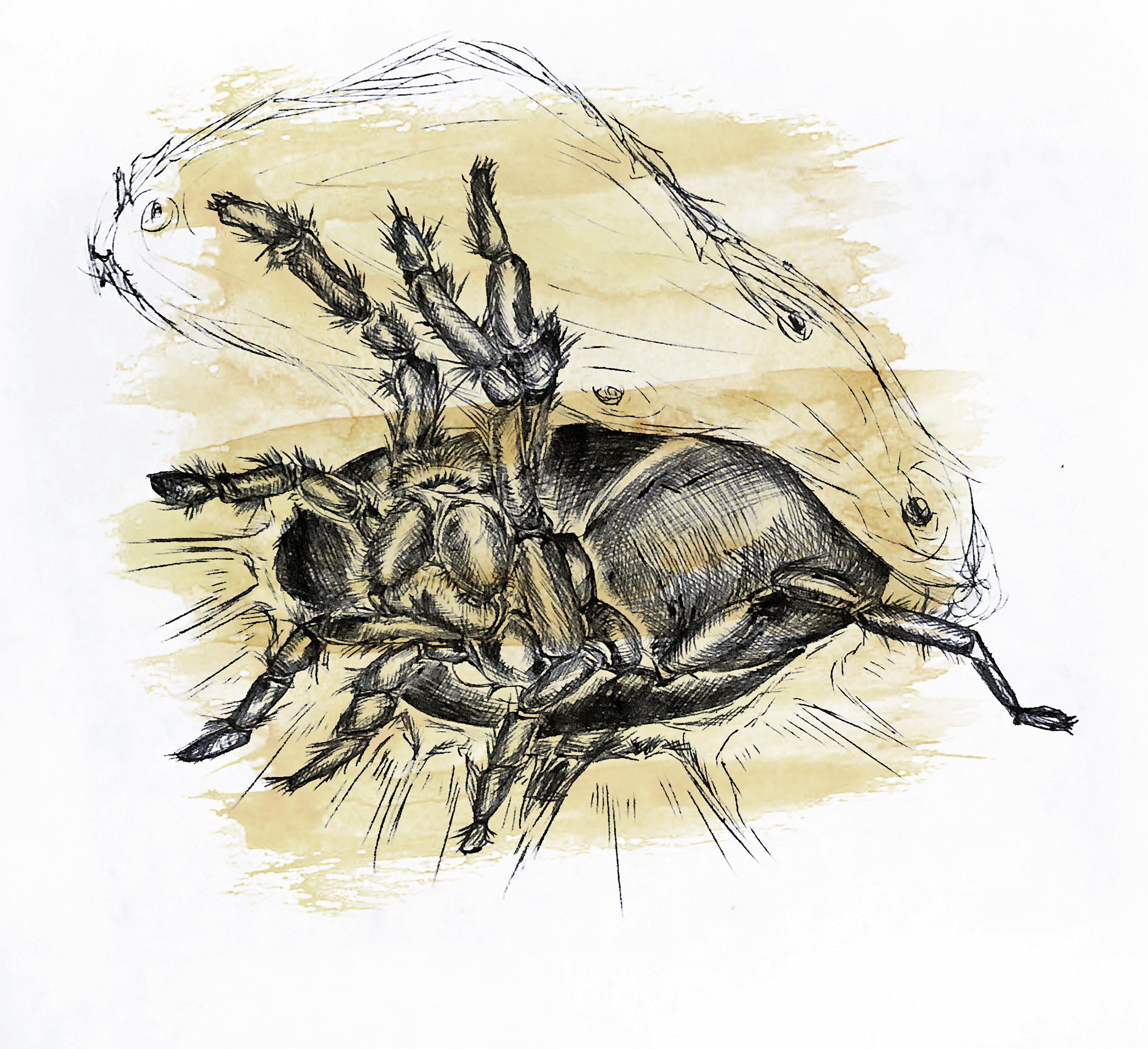 Kelsey_SpiderIllustration_v1.jpg