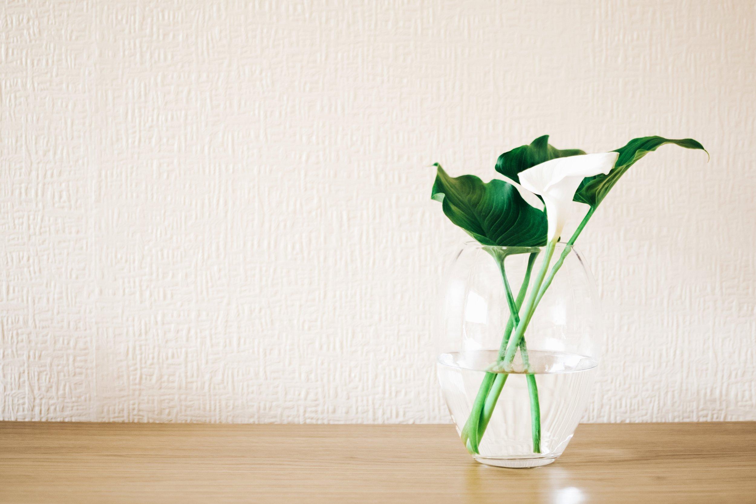 4k-wallpaper-beautiful-bloom-1266302.jpg