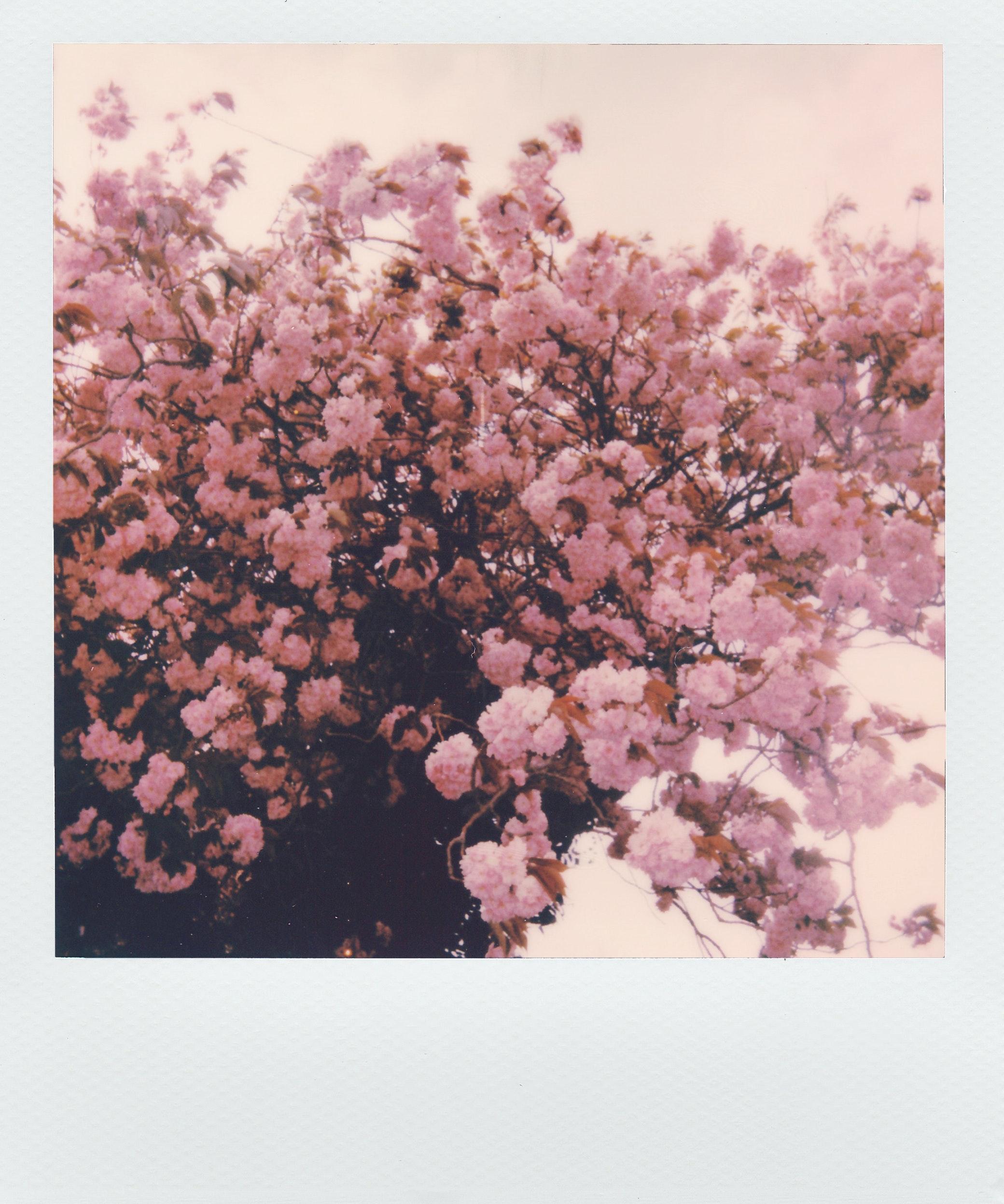 beautiful-beautiful-flowers-blooming-2171129.jpg