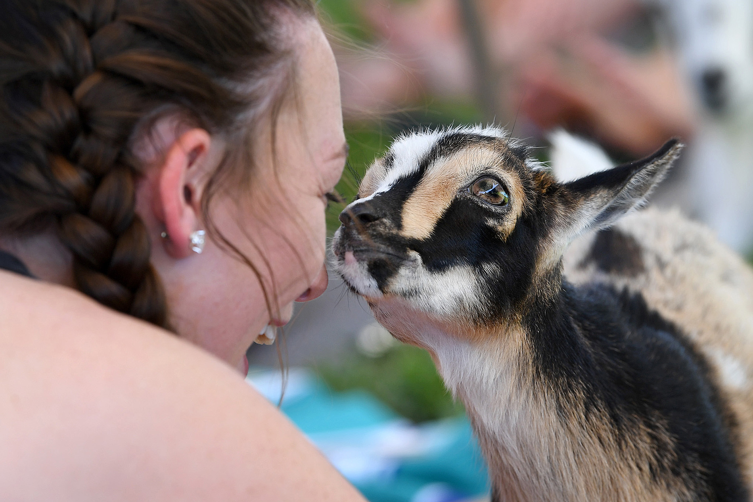 Faith, one of about a dozen goats at a yoga session for members of Aggie Belles and Aggie Sweethearts, sniffs Mikayla Price's face on April 26, 2019, in College Station, Texas. The goats chewed on grass and hair, rested on mats and climbed some participants during the class. Goat Yoga Texas owner Kimberly Brooke traveled with her goats from Cypress to offer three afternoon sessions for members of the student organizations. (Laura McKenzie/The Eagle)