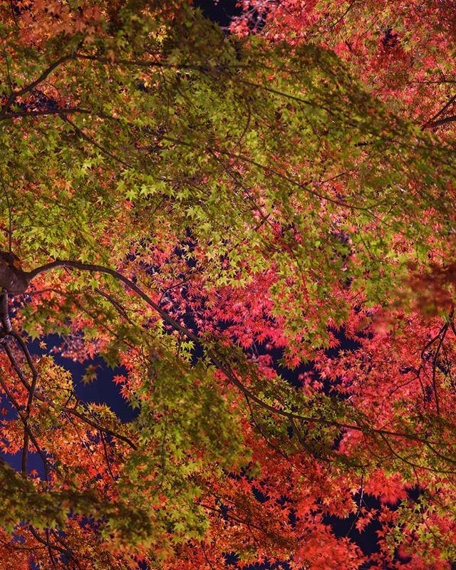 More autumn overload in Kawaguchiko
