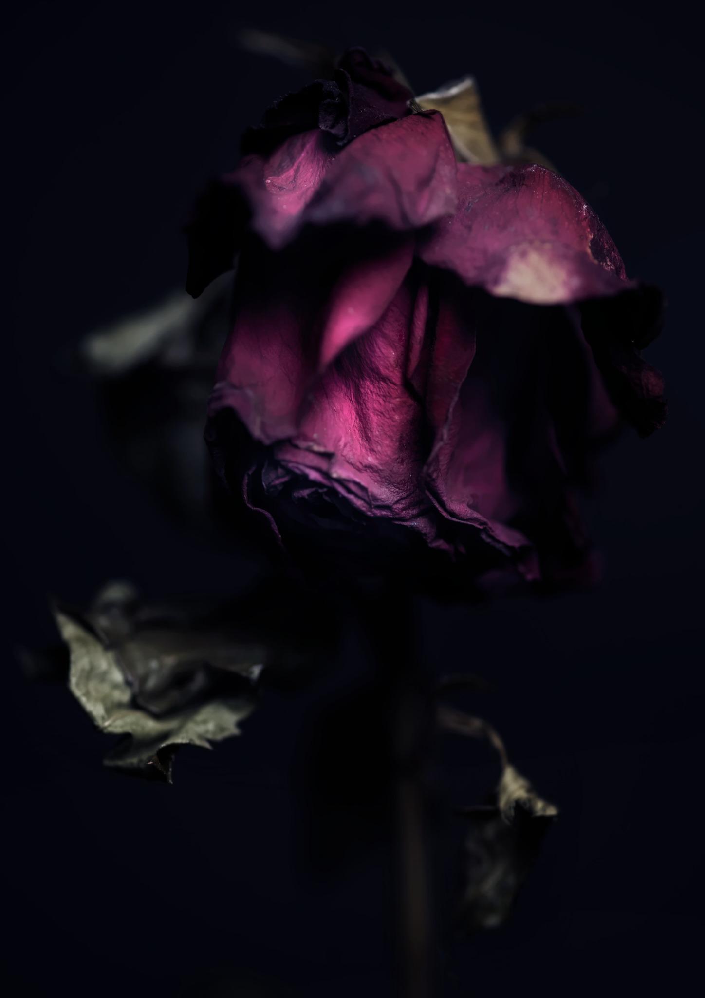 FLOWER_preview.jpg