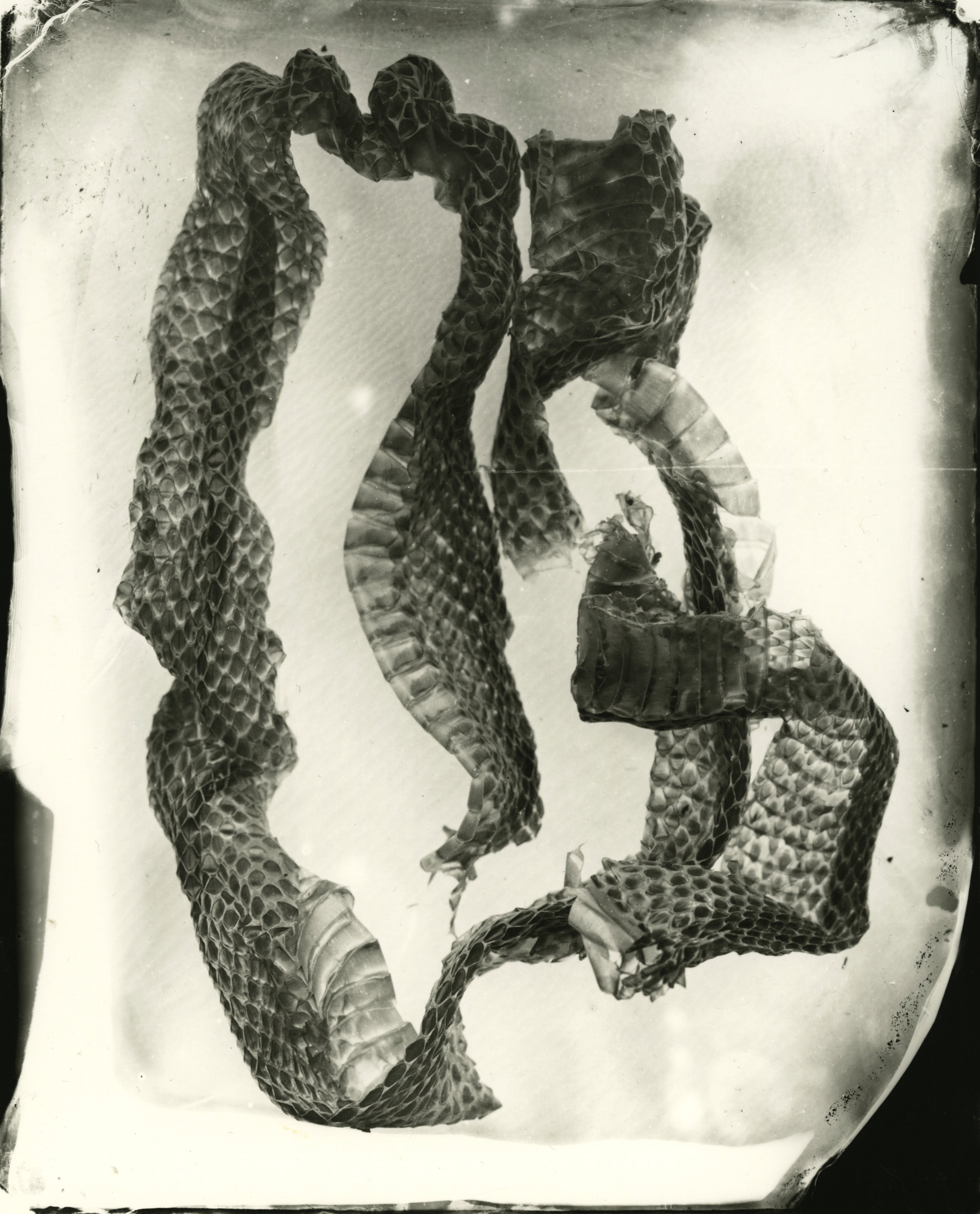 snakeskin003008edit.jpg