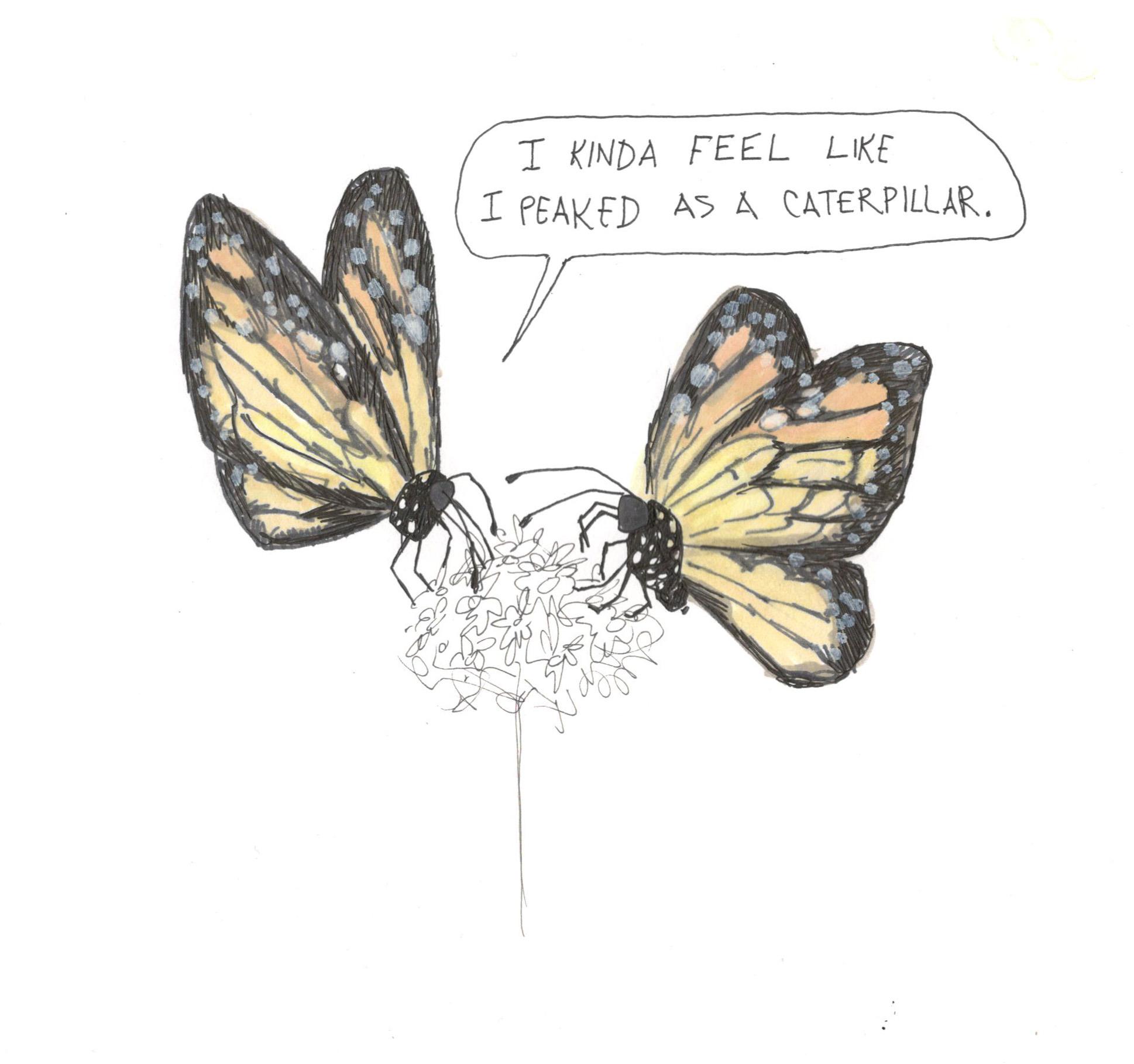 ButterflyPeakedAsCaterpillar.jpg