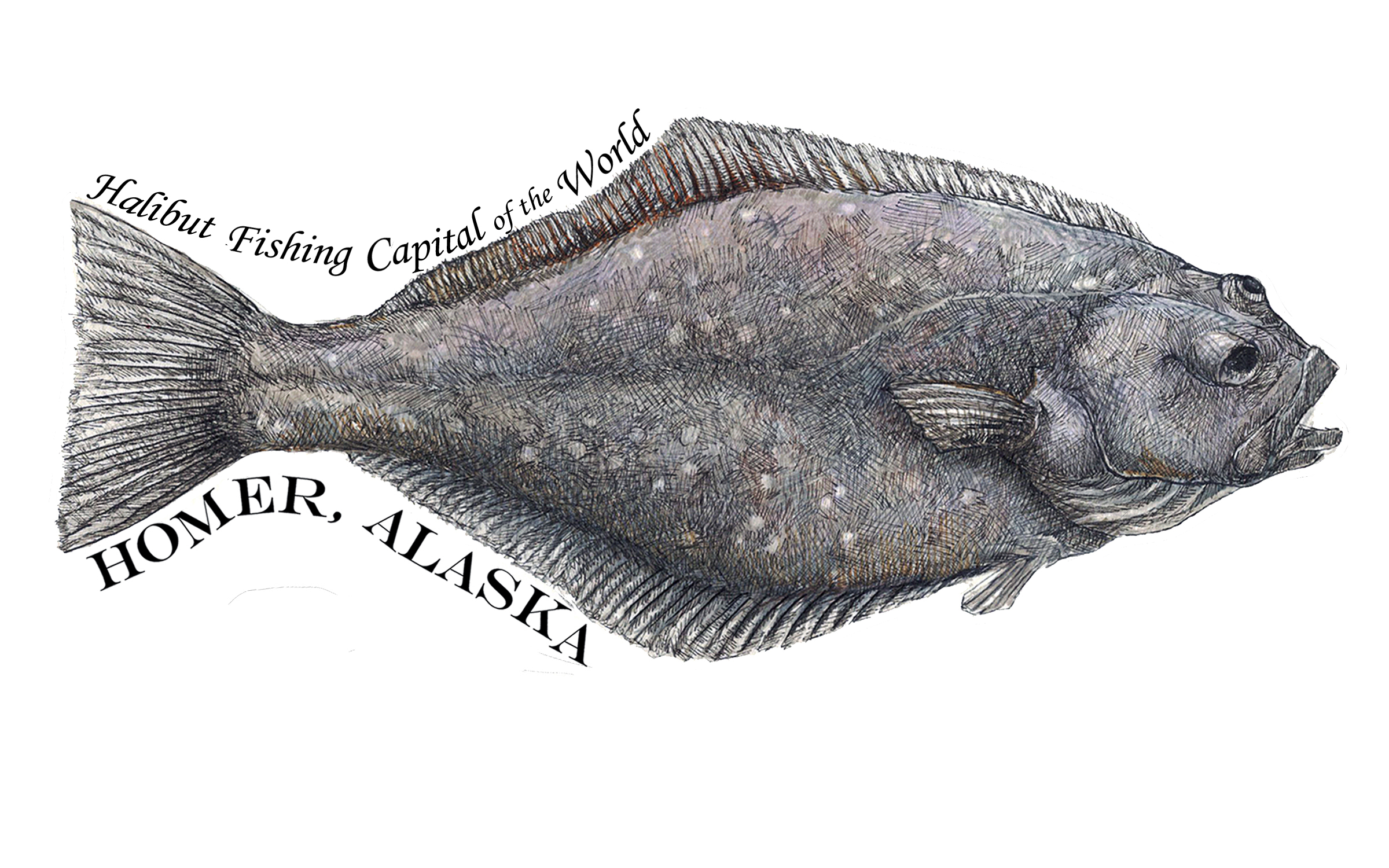 - This halibut was made into a custom sticker for a gift shop in Alaska. The original is pen and ink and marker.