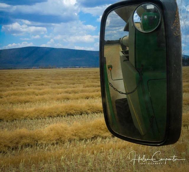 HELEN C -canola harvest 1.jpg