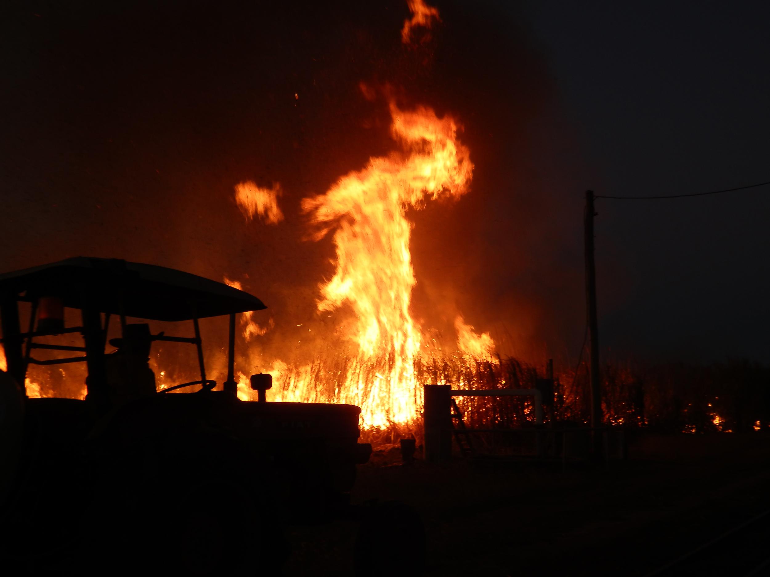 cane fire 2.jpg