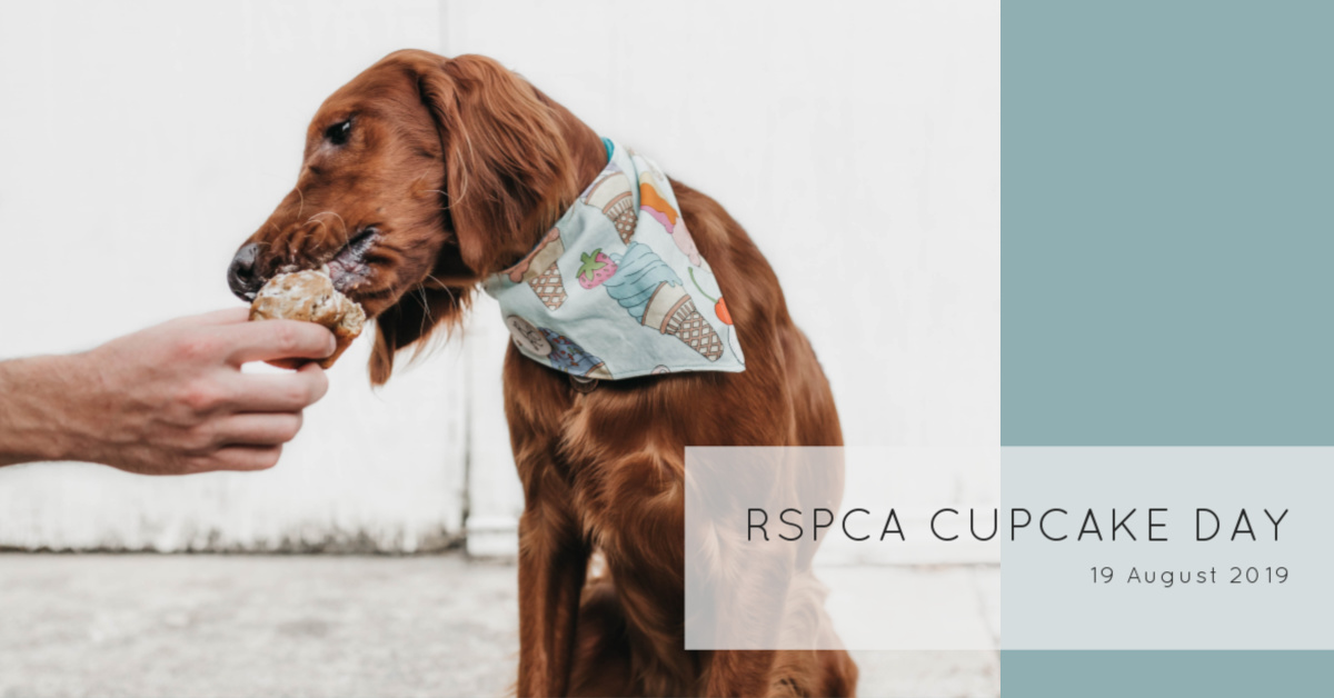 RSPCA Cupcake Day - Petula Savin - Header 1 copy.jpg
