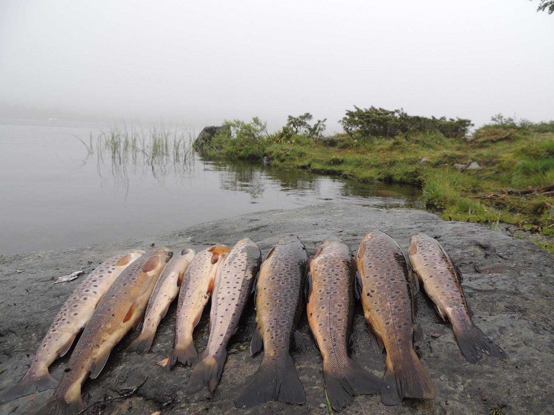 fiske øyerfjellet