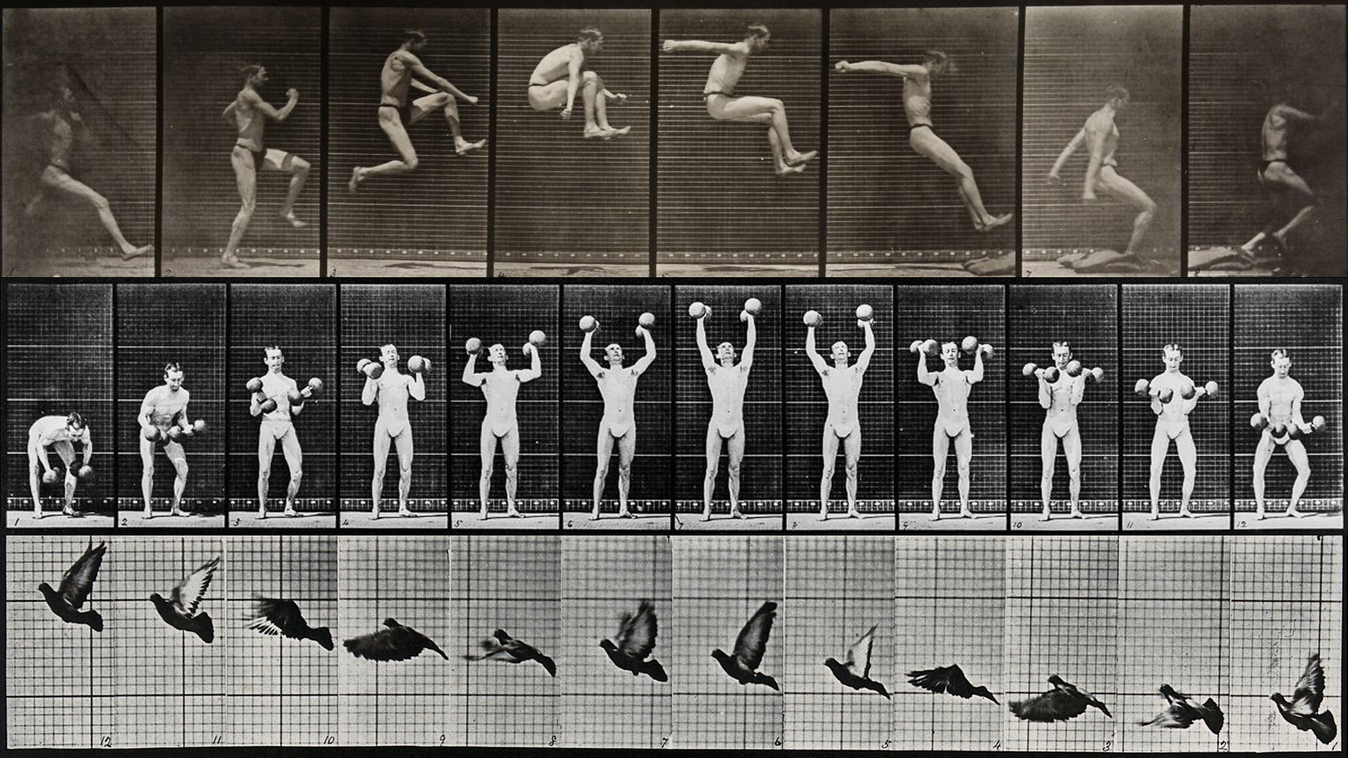 James Medcraft OCTAVE Eadweard Muybridge.jpg