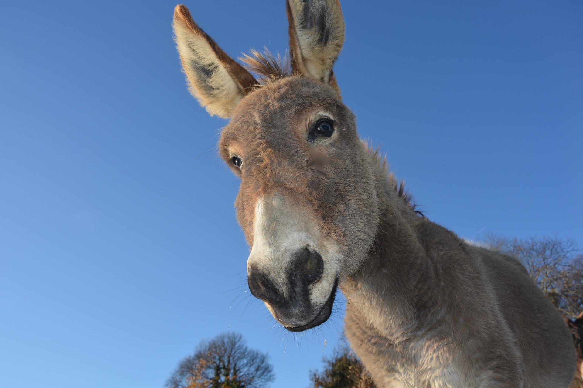 donkey-2996965_1920.jpg