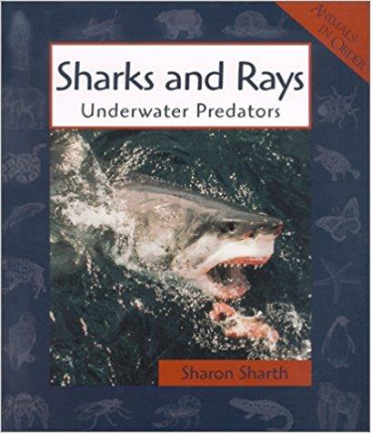 Sharks and Rays.jpg