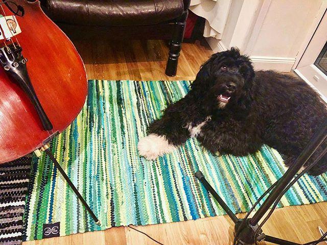 Härligt och mysigt med vacker julmusik i studion idag tyckte Buddha the dog! ✨🎄