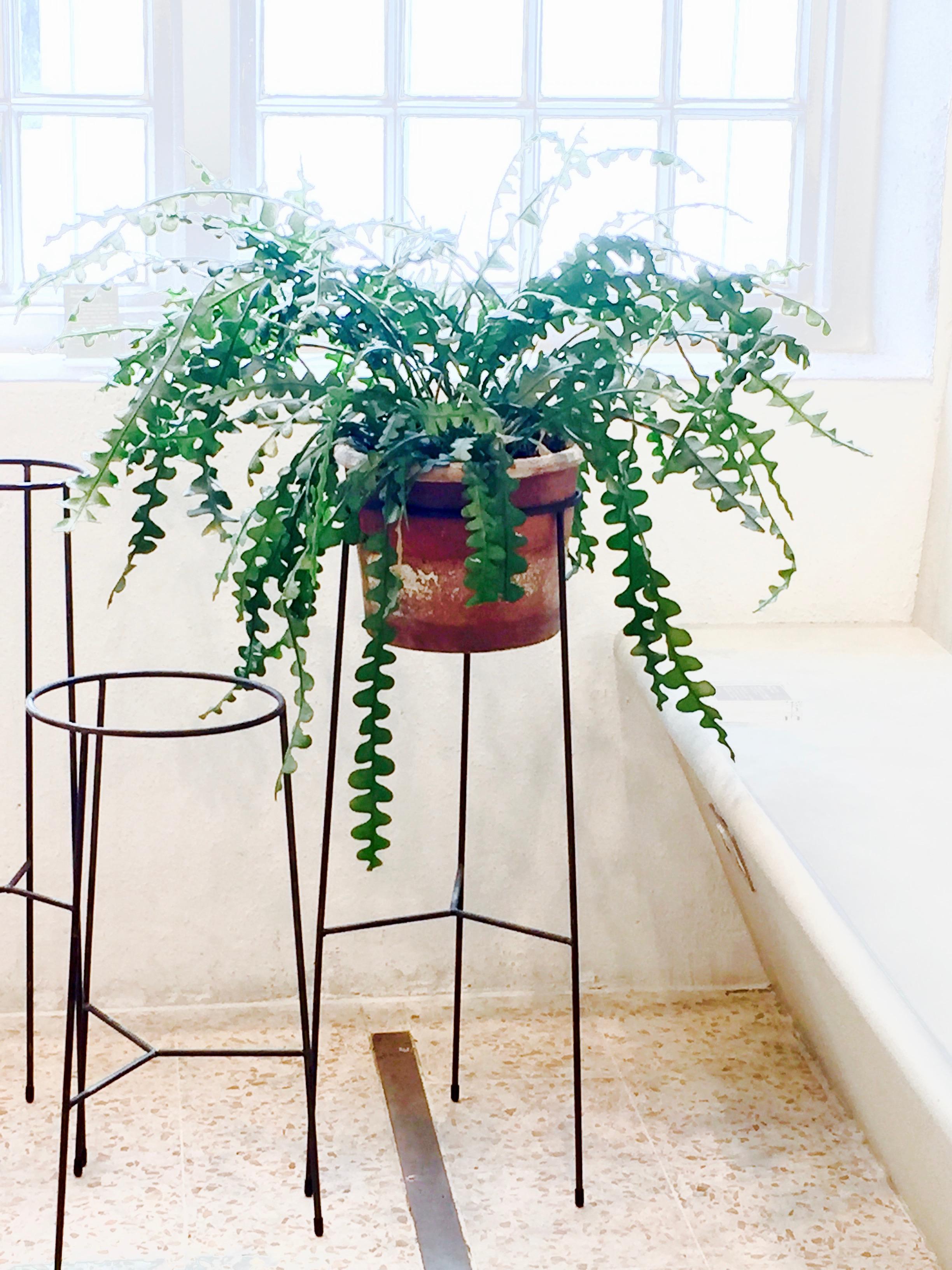 plantstandsNC.jpg