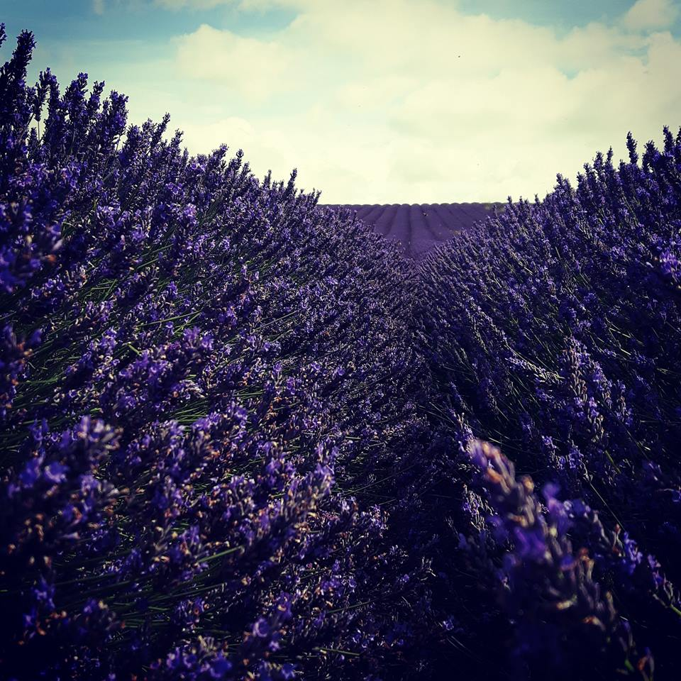 Outdoor Matwork Classes... - 6 weeks of Matwork classes at the beautiful Hitchin Lavender Fields.🖤 Thursdays 6:30 - 7:30pm🖤 6 June - 11 July