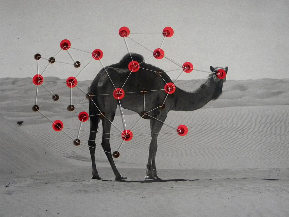 Untitled (Camel)