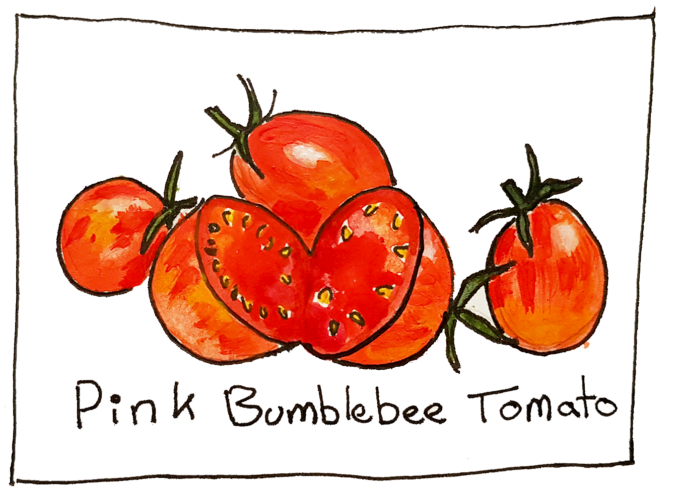 these tomatoes were bred by artisan seeds