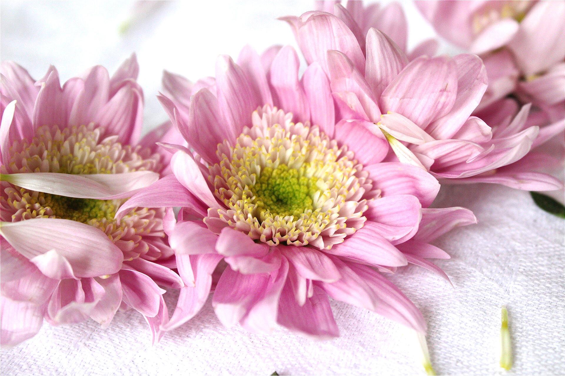 Botanical Prayer - an offering of love