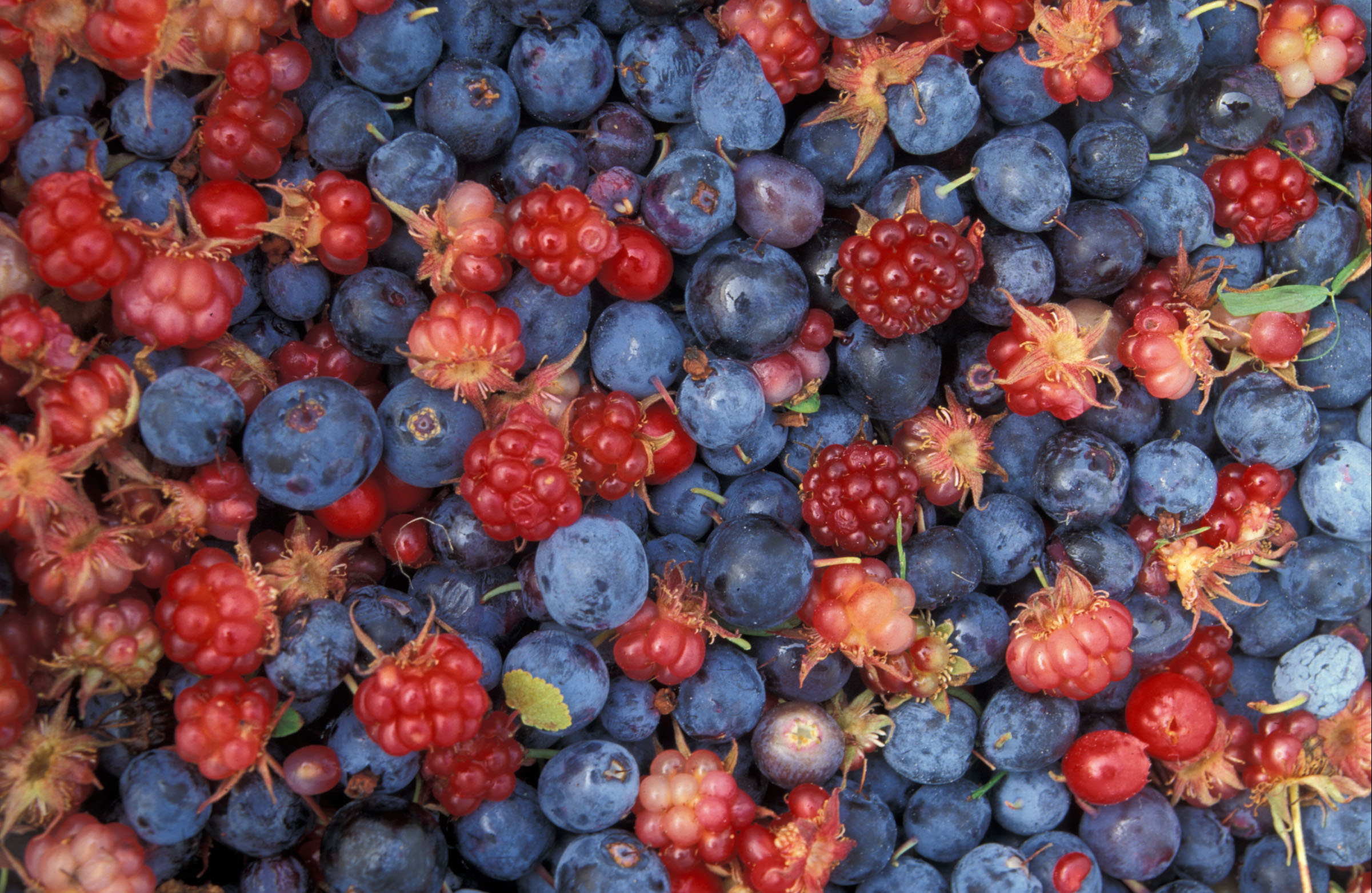 Berries - Nature's candy!
