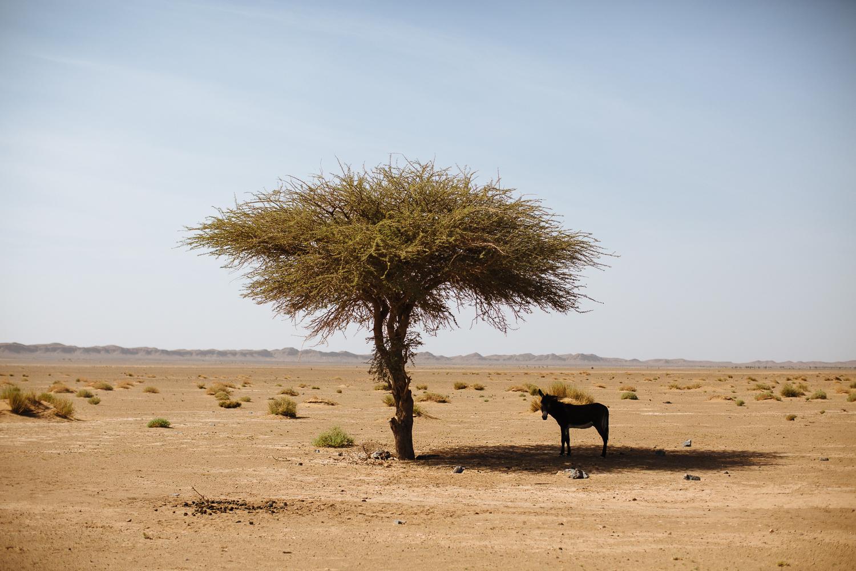 JBP_Website_Nomads-Morocco-8359.jpg