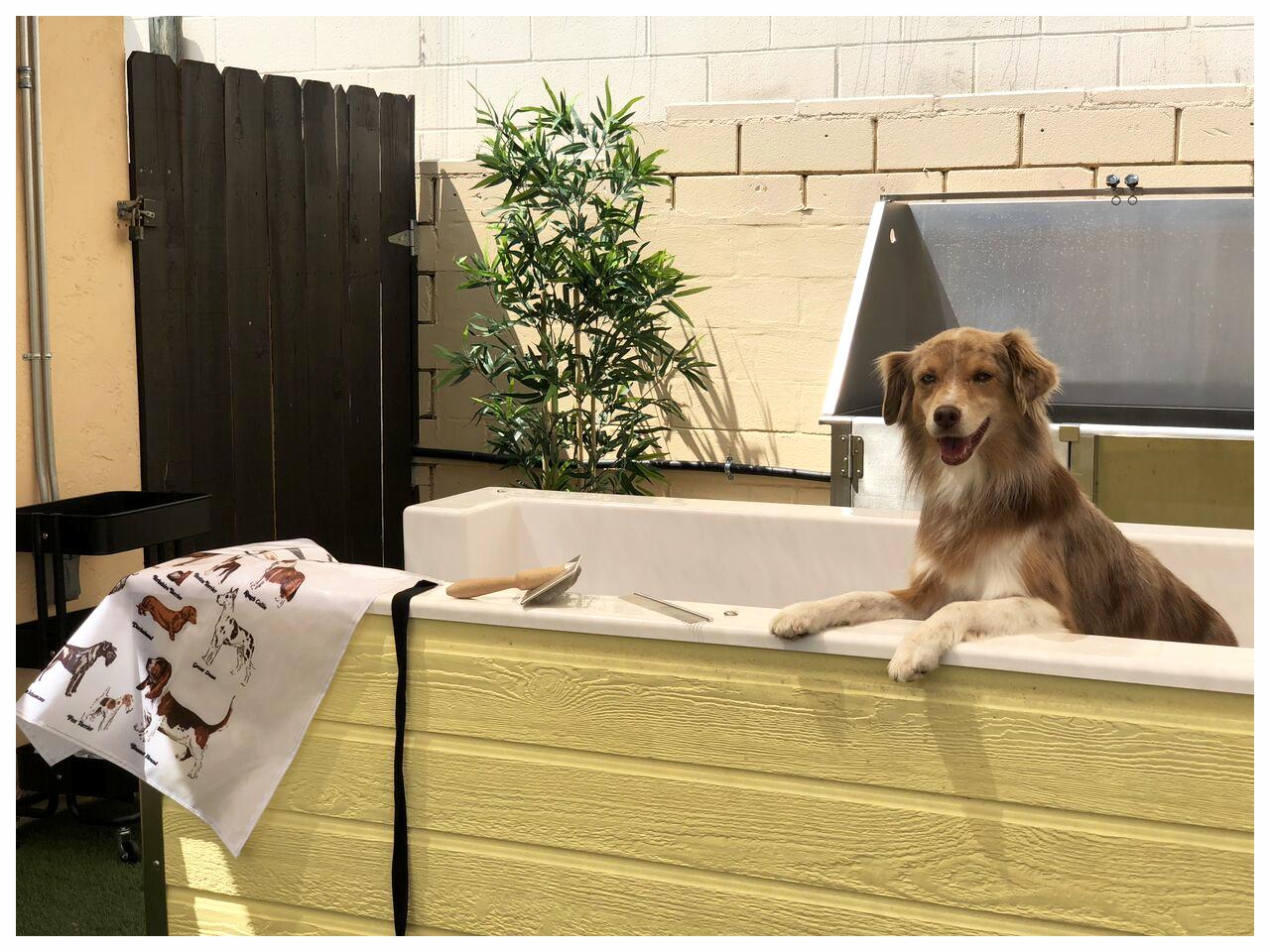 OUTDOOR SELF DOG WASH☆ - NEUGIER PET SHAMPOO + SOFT WATER SYSTEM