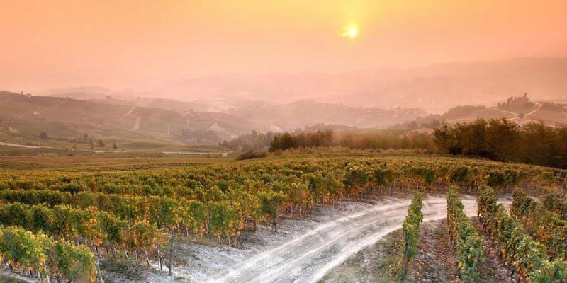 Officina Wines of G.D. Vajra