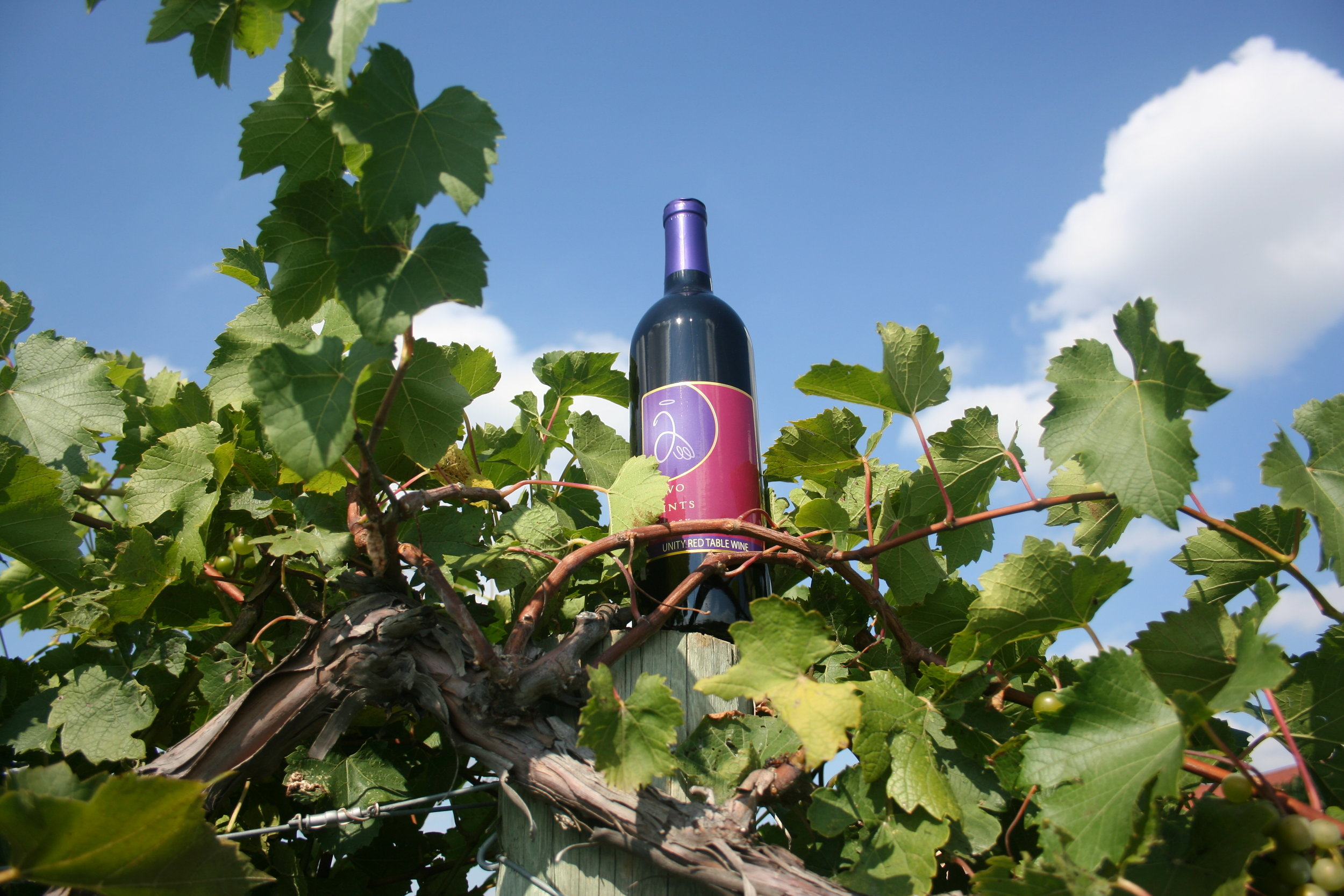 Bottle on post with vines 2.jpg