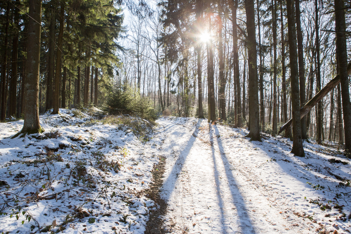 Winterlandschaft-wald.JPG