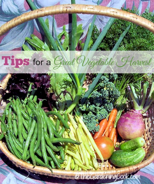 tips-great-vegetable-harvest.jpg