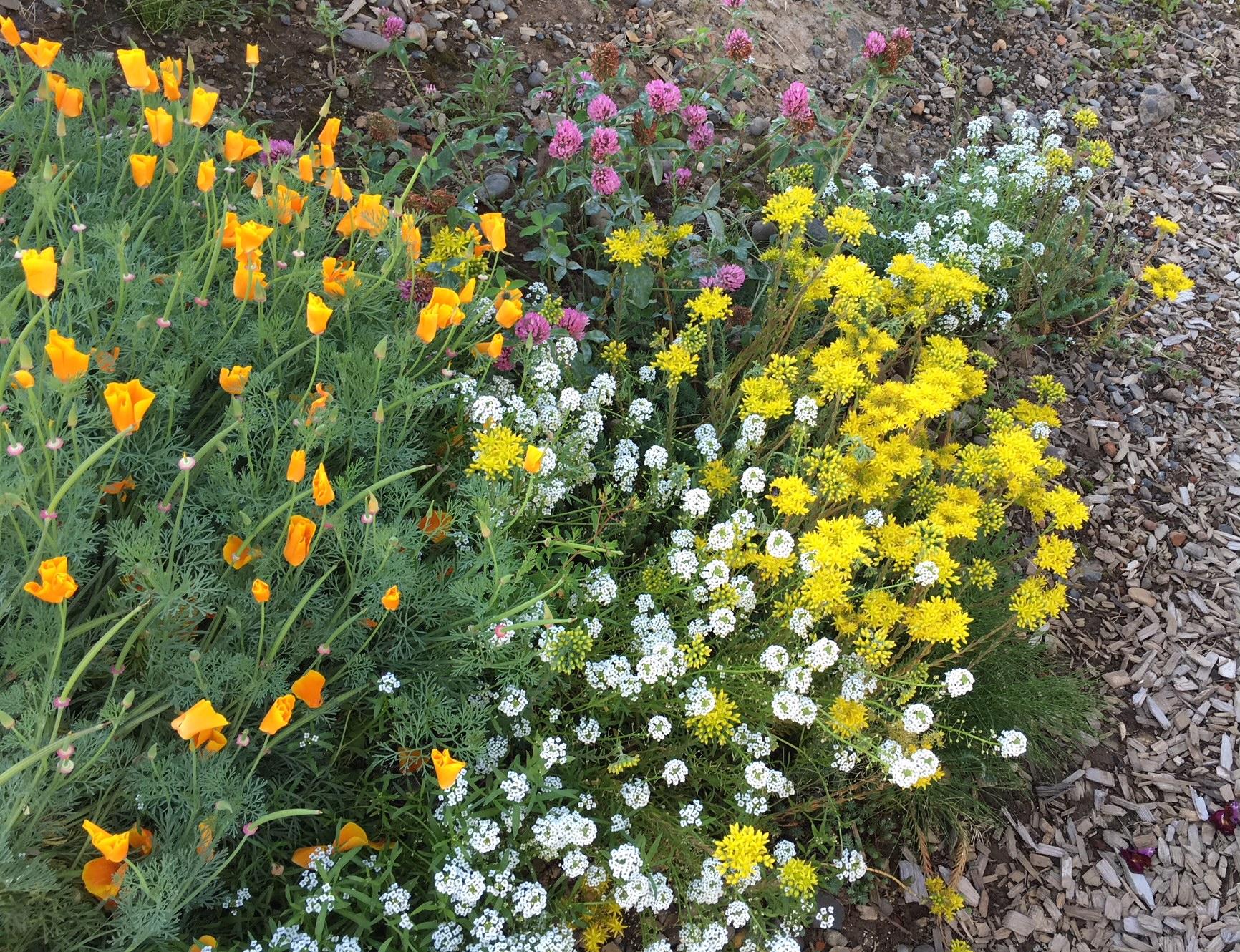 swcgflowers10.JPG