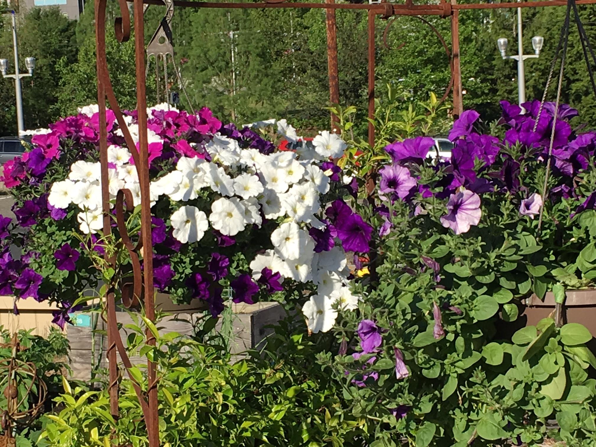 swcgflowers5.JPG