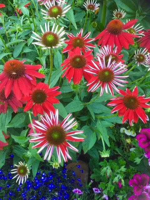 swcgflowers12.JPG