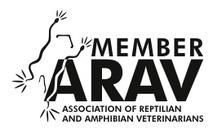 Dyrlæger fokuseret behandling af krybdyr.