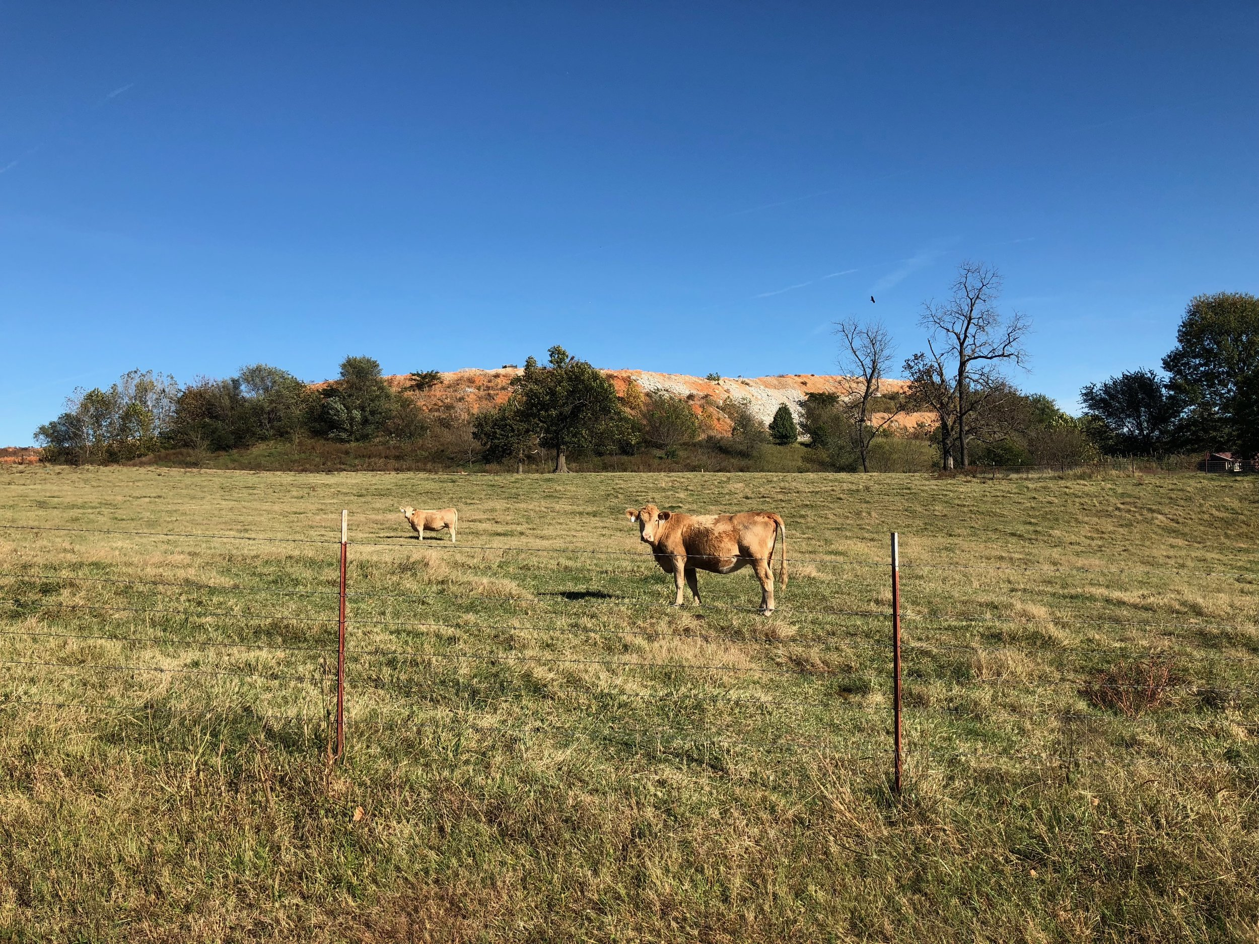 Pasture pals with a road construction backdrop