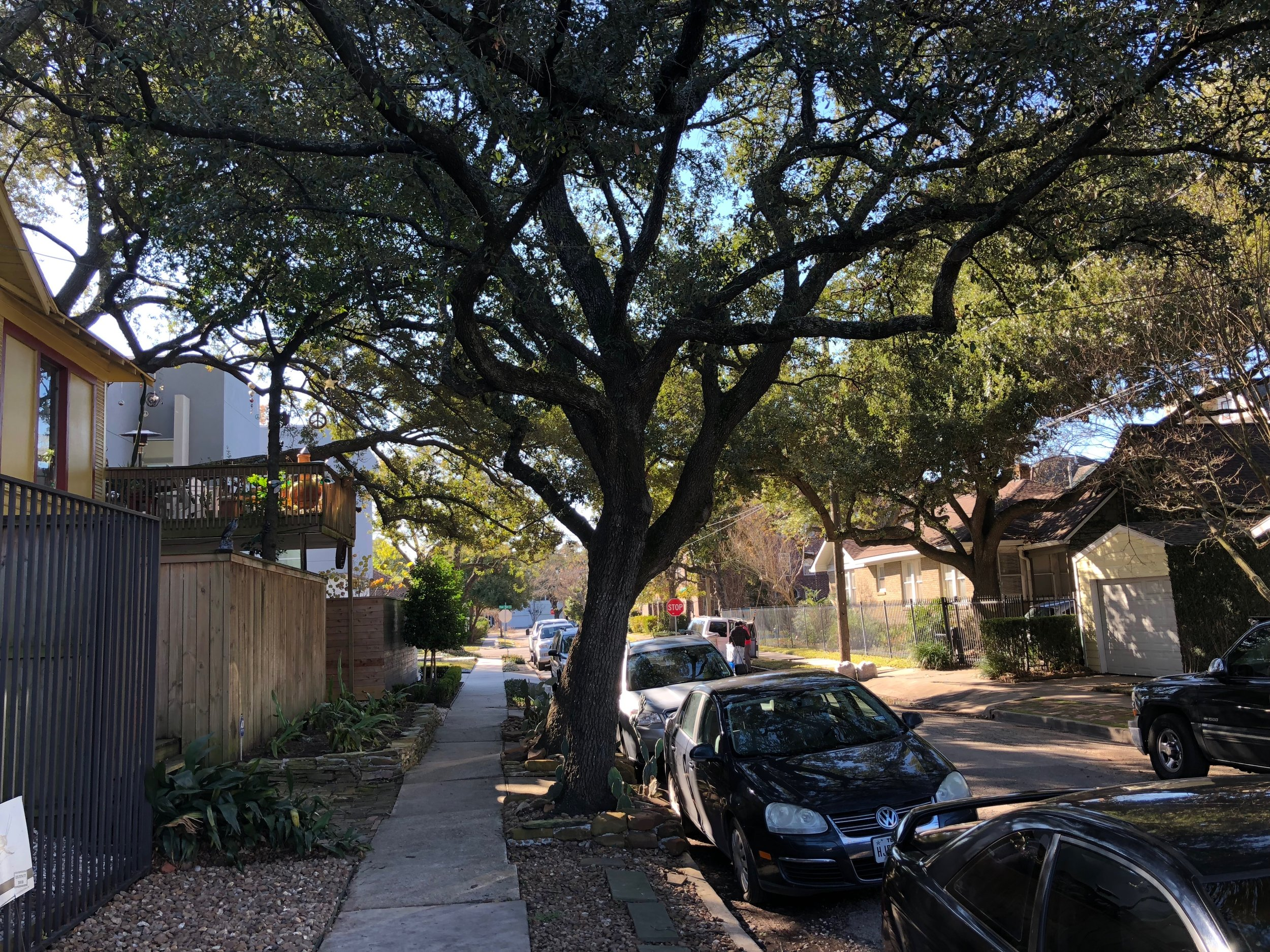 Quiet tree-lined streets