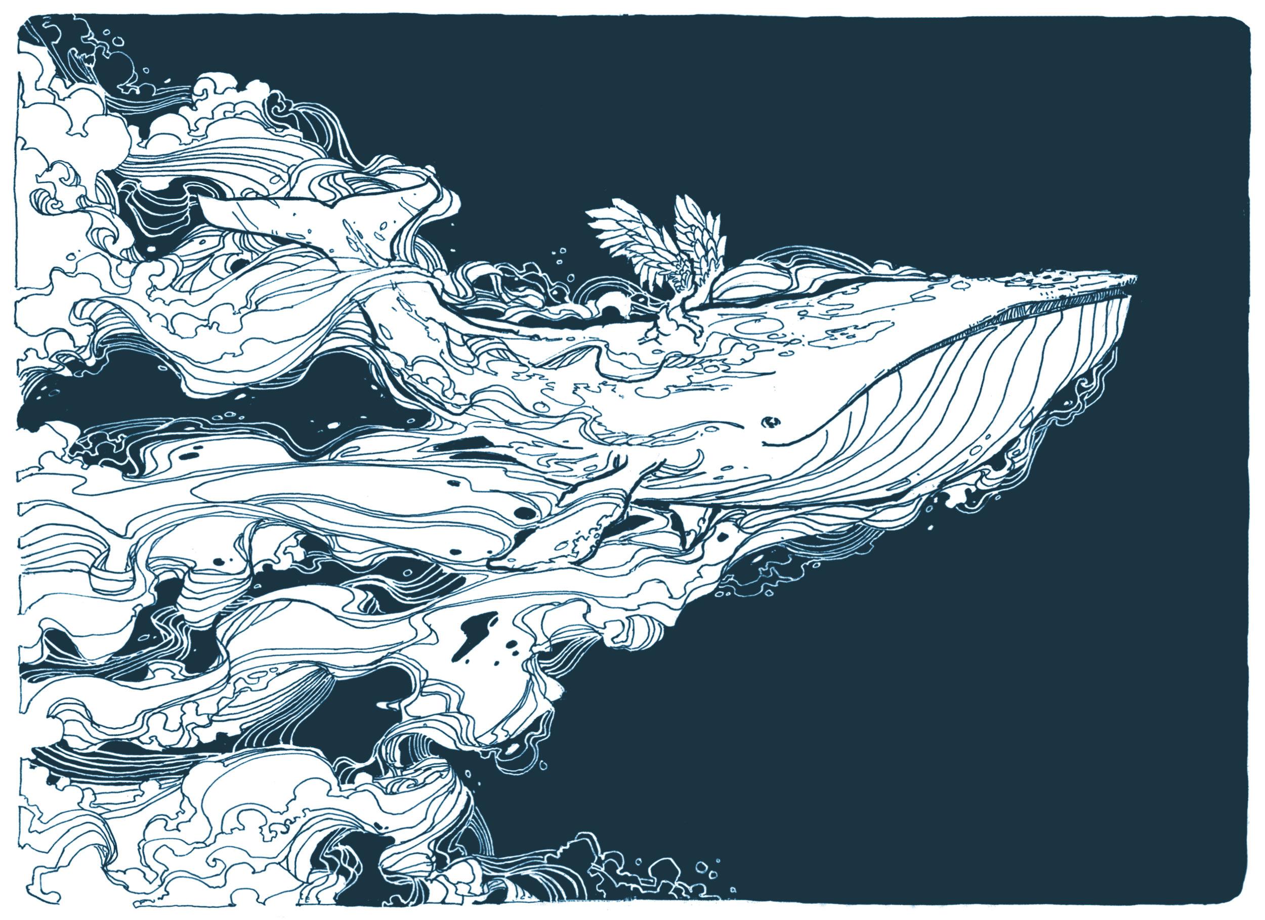 whale (2).jpg