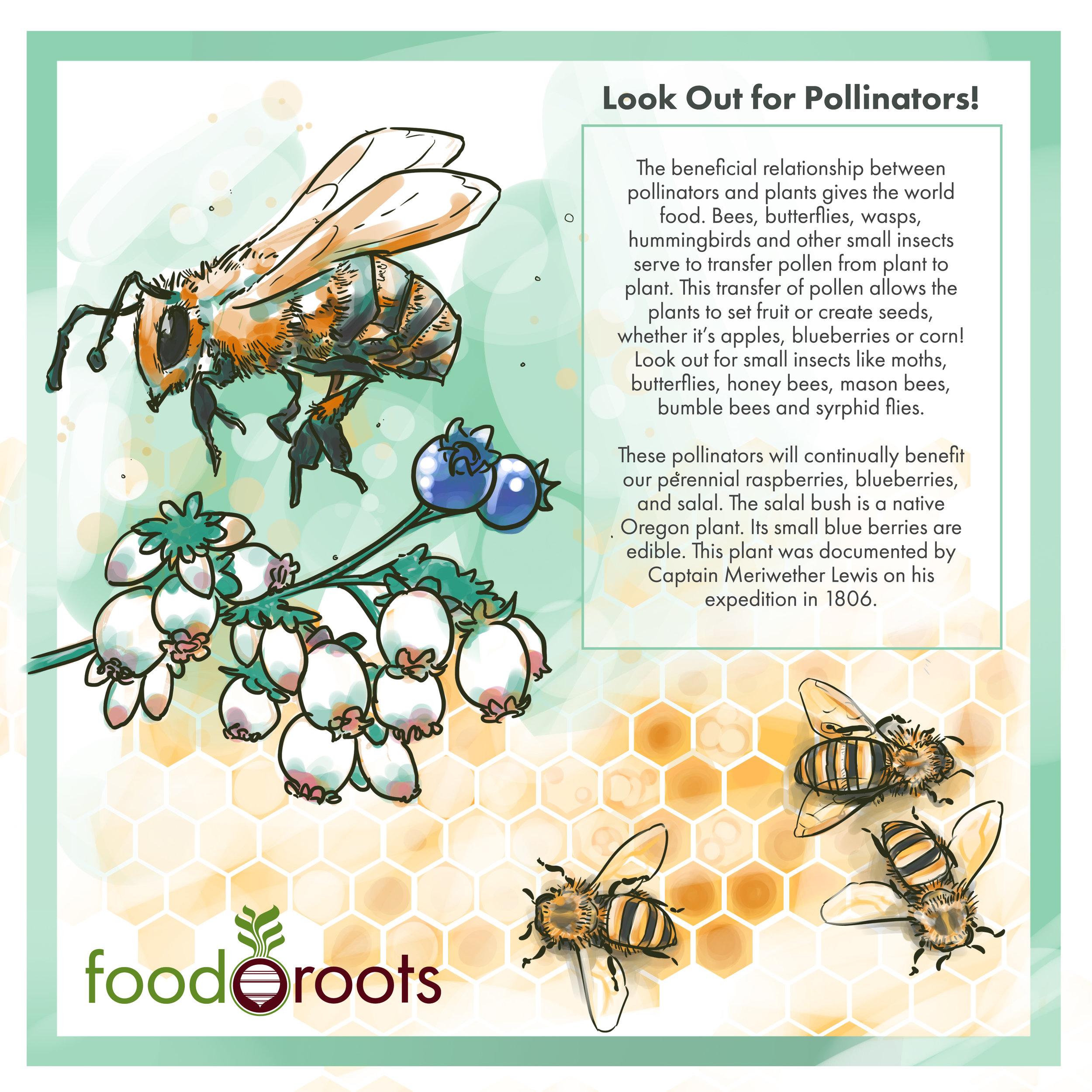 pollinator-03.jpg