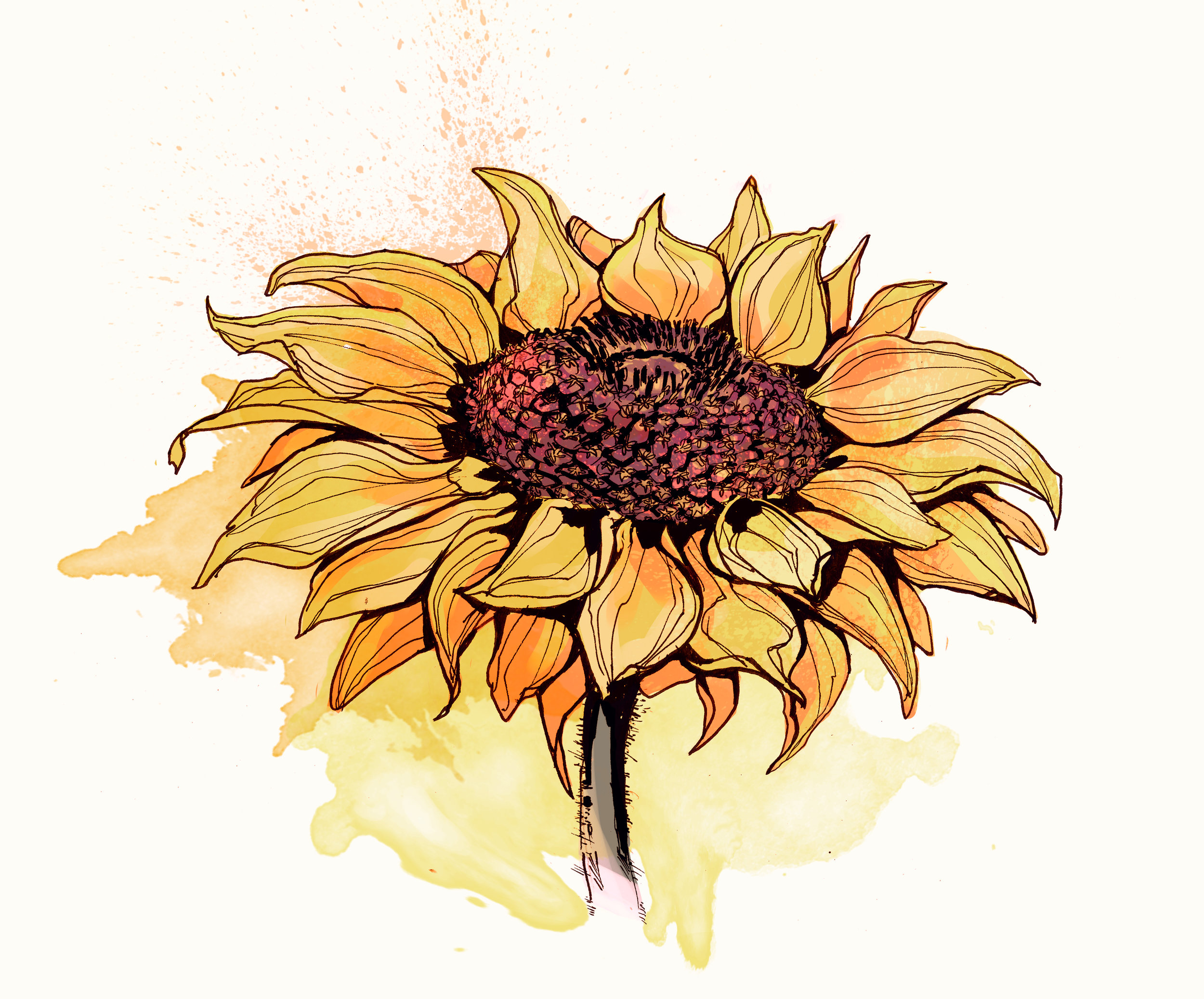 newlettersunflower.jpg