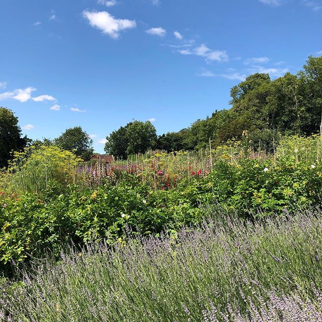 The glorious Pythouse Kitchen Garden in Wiltshire - an 18th century walled kitchen garden providing the adjoining restaurant with an abundance of flowers, fruits, vegetables and herbs. The perfect spot for lunch, followed by a walk around the gardens. My idea of heaven 💕#pythousekitchengarden #walledkitchengarden #potagergarden #perfectlunch #countrylife #herbgrowing #howdoesyourgardengrow #englishcountrygarden #medicinalgarden