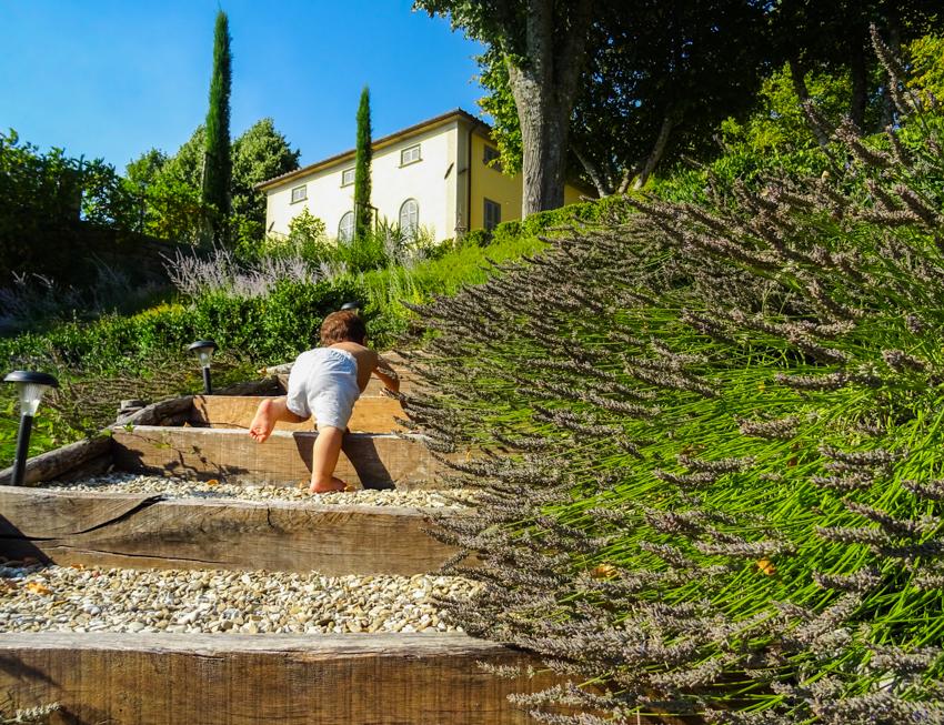 Toscana och blomstrande lavendel