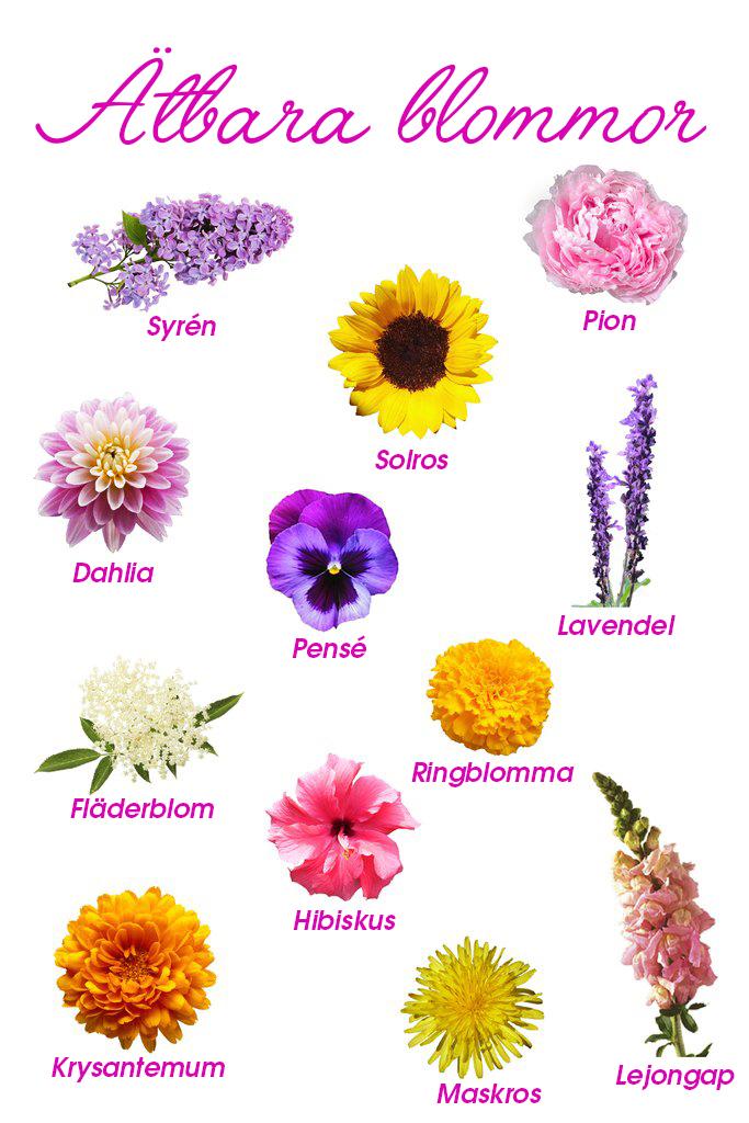 ätbara-blommor-guide.jpg