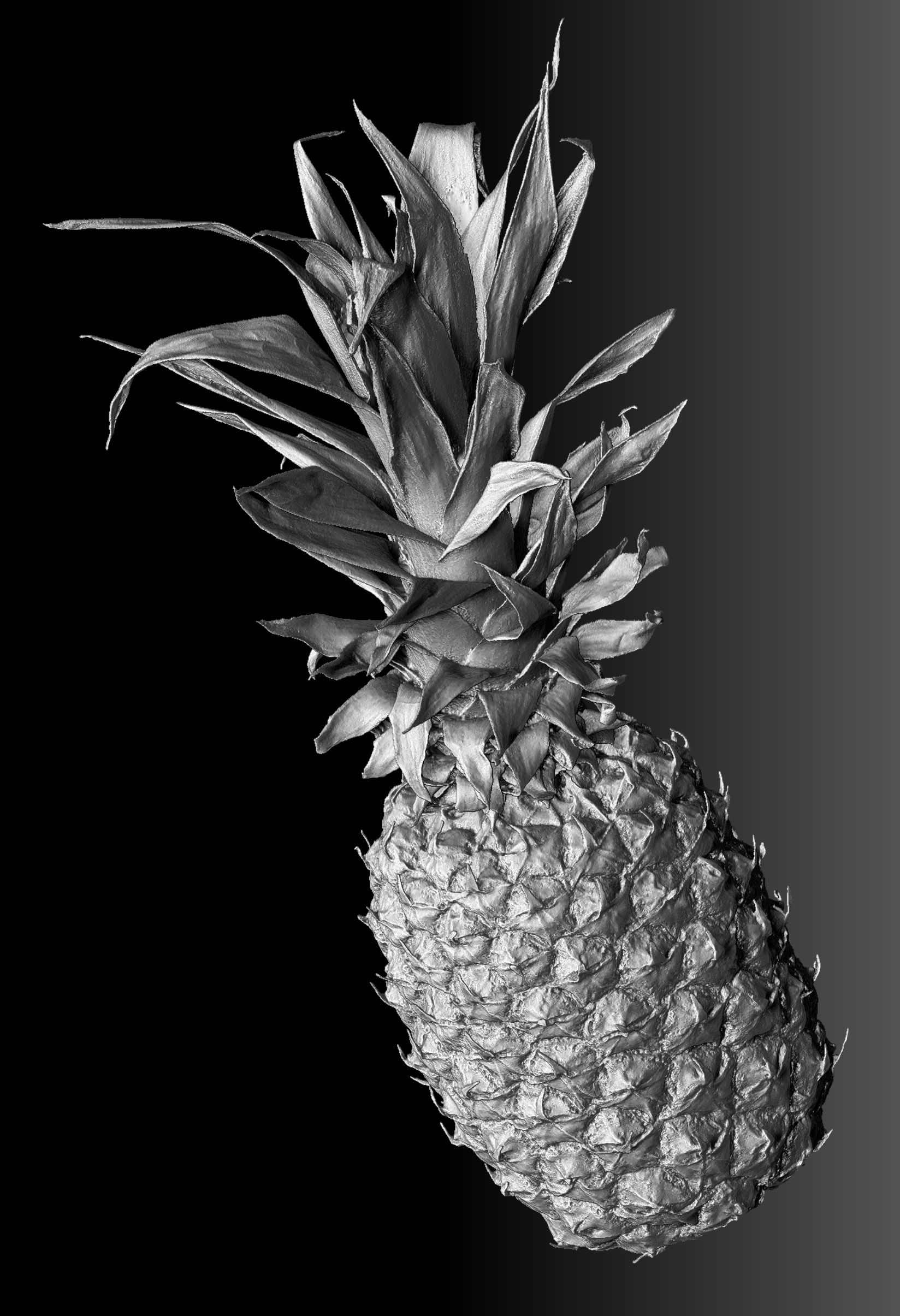 Pinapple_01_Grey.jpg