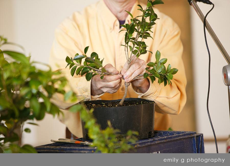 bonsai_camellia.jpg