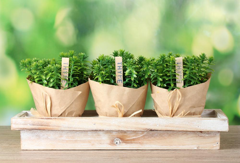 hort seedlings.jpg