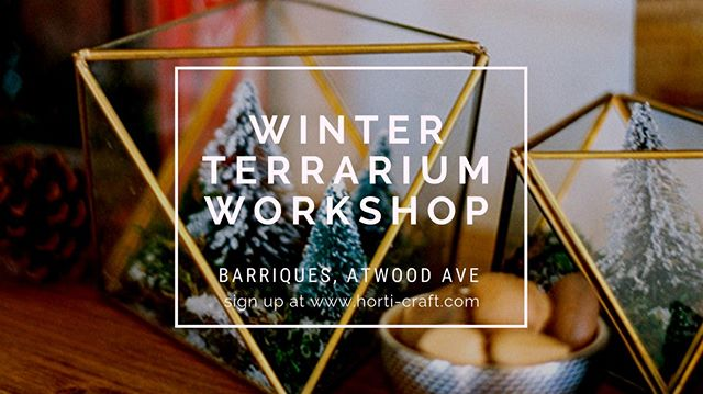 Two Winter Terrarium Workshops coming up