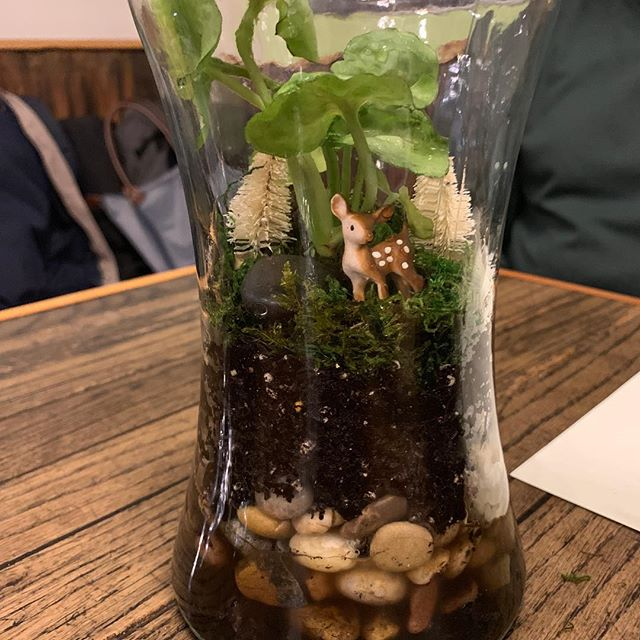 A few photos from our Terrarium Workshop 12.13 at Barriques Atwood! #terrarium #succulent #wintertime #coffee #wine
