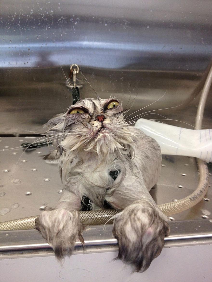 funny-wet-cats-8.jpg